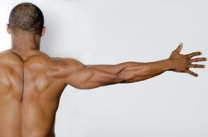 首から肩甲骨周りにかけて、肩甲挙筋、 菱形筋、僧帽筋などがあり、首から背中にかけて、 僧帽筋、脊柱起立筋群、広背筋などがあります