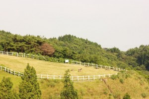 僕が8月11日(木・山の日)に、兵庫県の六甲山牧場に行ってきた話をさせていただきます。
