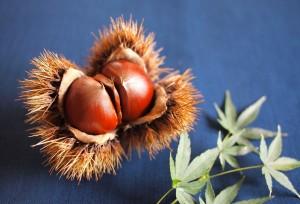 乾燥したお肌には、秋に旬を迎える栗がオススメです!    栗はビタミンCが豊富です。